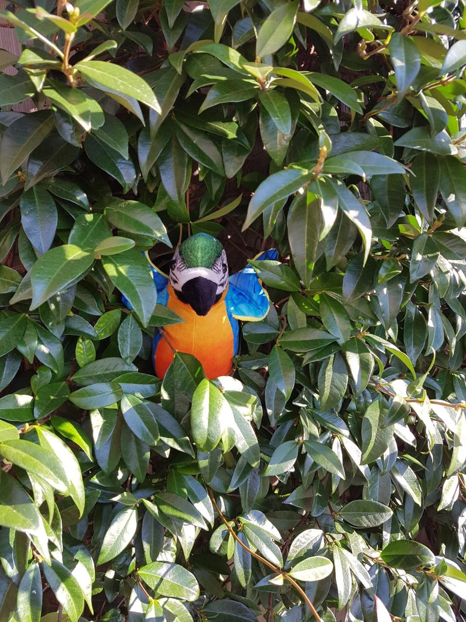 napraat papegaaien knuffel voicerecorder